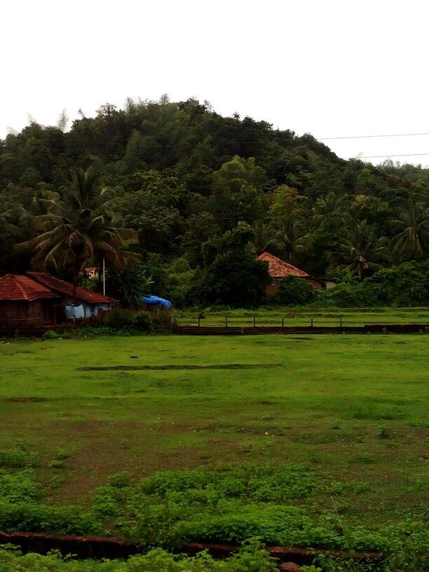 घराच्या आजूबाजूची हिरवळ आणि नारळांची झाडे
