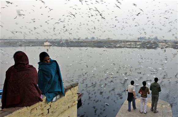 यमुना नदीवर  जमलेला पक्षांचा थवा