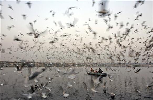 पक्ष्यांची नदीवर सैर
