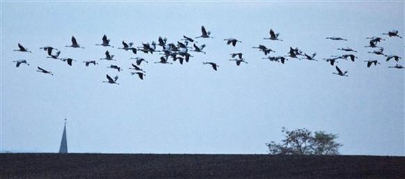 पक्षी घेई आकाशी झेप