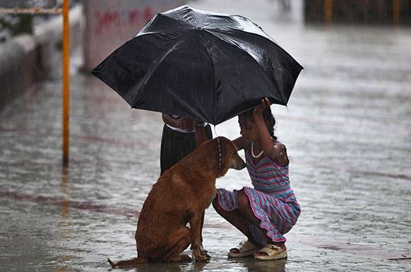 प्राण्यांनाही निवाऱ्याची गरज असतेच की!