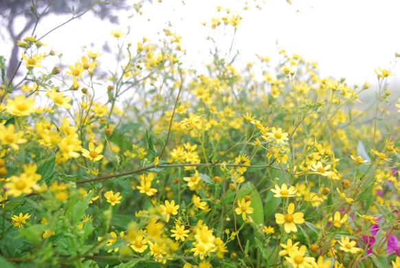 केवळ १०-१५ दिवसांच्या काळात पठारावर ही फुलं फुललेली आढळतात.