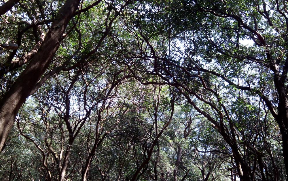 या झाडांच्या आड दडलंय तरी काय...