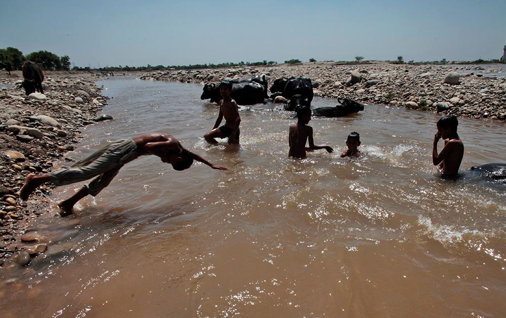 जम्मूतल्या तावी नदीत म्हशींसोबत स्वत: ही पाण्यात डुबकी मारतांना हे मुलं...