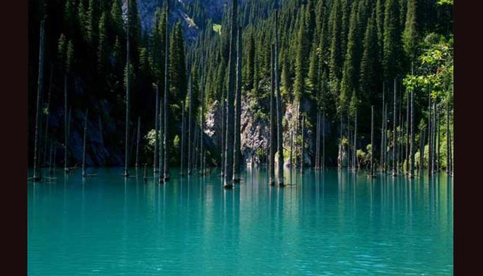 कॅन्डी लेकमधील जंगल, काझाकिस्तान कॅन्डी लेकमध्ये पाण्याच्या खाली असलेले हे जंगल काझाकिस्तानमध्ये आहे. अल्मती शहरात १२९ किलोमीटर लांब असलेले तिआन शान पर्वताजवळ हा लेक ४०० मीटर लांब आहे. हा लेक १९११ मध्ये आलेल्या भूकंपामध्ये घसरत आलेल्या माती आणि दगडांमुळे निर्माण झाली आहे. यात तलावाच्या मध्ये असलेल्या पाण्यामध्ये झाडे आहेत.