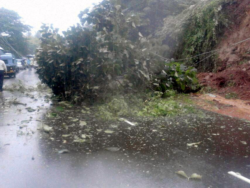 मुंबई-गोवा महामार्गावरील संगमेश्वर येथे दरड कोसळल्याने झाड रस्त्यावर आले.