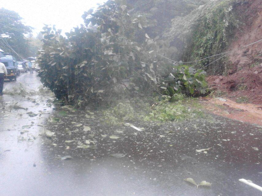 मुंबई-गोवा महामार्गावरील दरड कोसळल्याने झाड रस्त्यावर