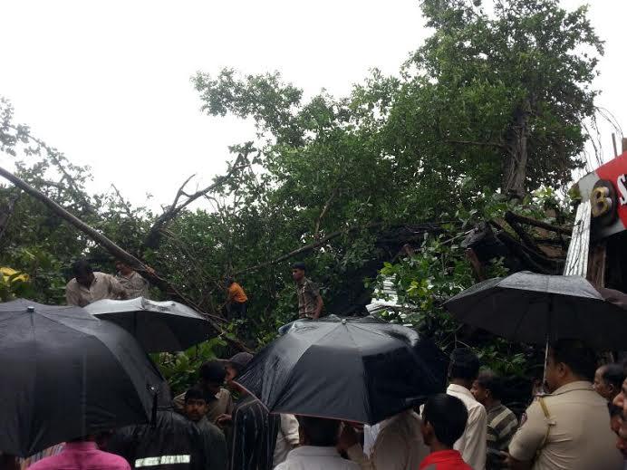 देवरुख येथे कोसळलेला वृक्ष