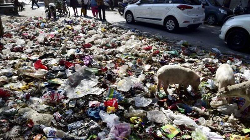 कचराप्रश्न सोडवण्यासाठी काय केलेत, न्यायालयाचा पालिकेला सवाल