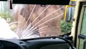 VIRAL VIDEO: हत्तीने बसवर केला हल्ला आणि मग...
