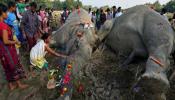 आसाममध्ये १०० दिवसांत ४० हत्तींचा अनैसर्गिक मृत्यू