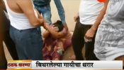 व्हिडिओ : दिसेल त्याला धडका देणाऱ्या गाईला असं केलं जेरबंद
