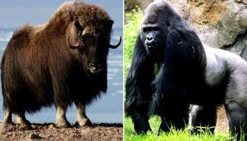 जगातील 10 शक्तीशाली प्राणी