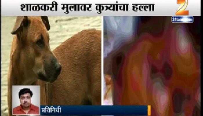 शाळकरी मुलावर भटक्या कुत्र्यांचा हल्ला, १०० टाके