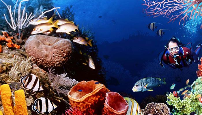 पाण्याखालची रंगीन दुनिया पाहायला चला सिंधुदुर्गात!
