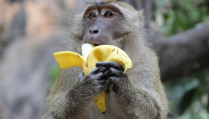 माकडाच्या हाती कोलीत... नव्हे करोडोंची संपत्ती!