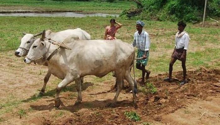 खुशखबर, शेतकऱ्यांनी सावकाराकडून घेतलेलं कर्ज माफ!