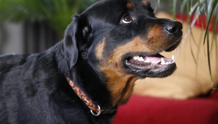 विधानसभेत सन्माननीय कुत्र्यावर हास्यकल्लोळ