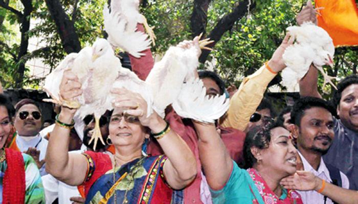 शिवसेनेला 'कोंबडी' पडणार महागात, पेटाची निवडणूक आयोगाकडे तक्रार