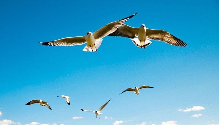 'पक्षांना आहे उडण्याचा अधिकार, पिंजऱ्यात बंद केलं जाणार नाही '- HC