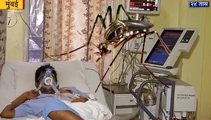 सावधान ! मुंबईत डेंग्यू आजाराची एंट्री