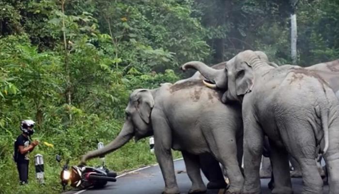 व्हिडीओ   सहा हत्तींचा मोटरसायकलस्वारावर हल्ला