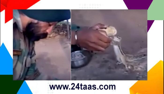 पाहा व्हिडिओ : भारतीय सैनिकाने आपलं जेवण खारूताईसोबत शेअर केलं.