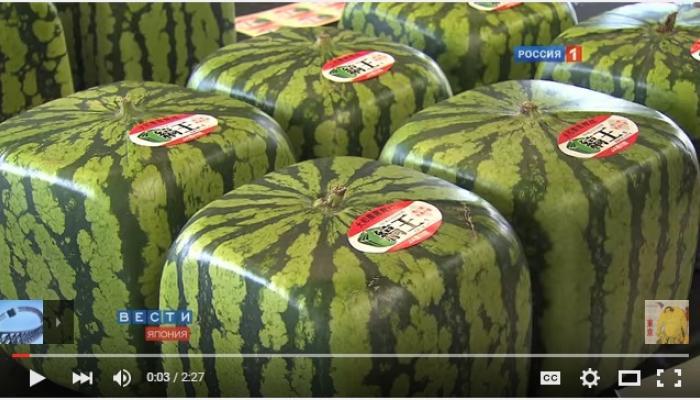 VIDEO   जपानमध्ये पिकवतात चौकोनी कलिंगड