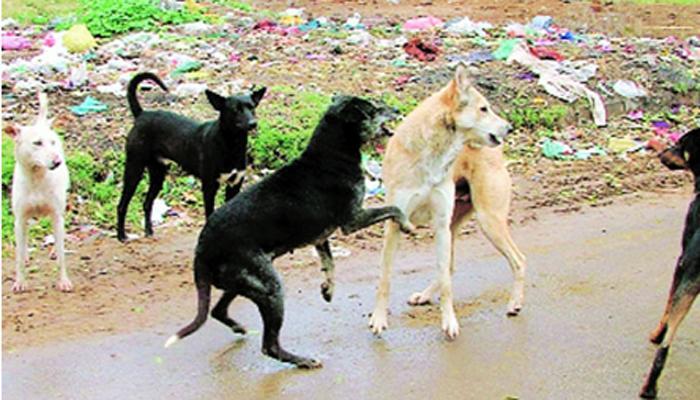 धोकायदायक कुत्र्यांना संपवा - सर्वोच्च न्यायालय