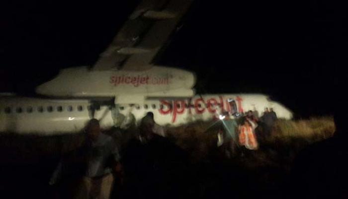 डुकरांना जाऊन धडकलं विमान