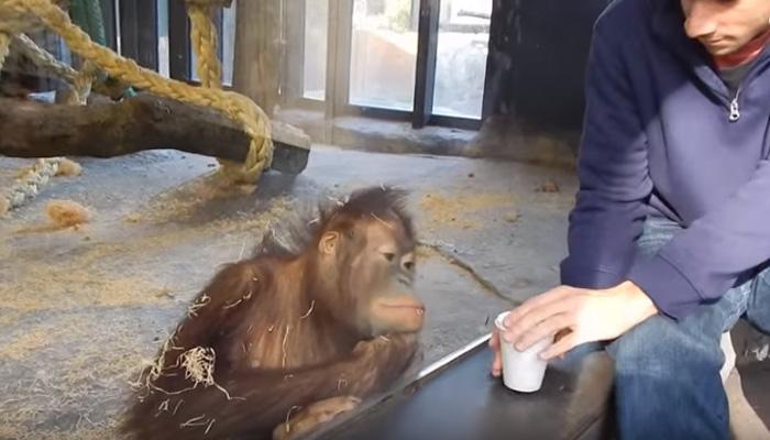 माकडाला जादू दाखवली, तर काय होतं?