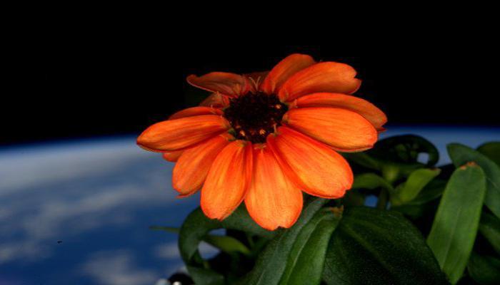 अंतराळात उमललं हे पहिलं फूल