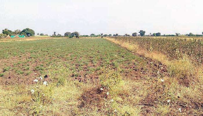 नाशिकमधील दुष्काळग्रस्त शेतकऱ्याला शिवसेनेचे पोकळ आश्वासन