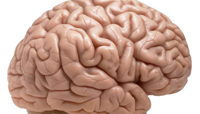१४ दिवसांत हा किडा तुमचा मेंदू कुरतडून टाकू शकतो!