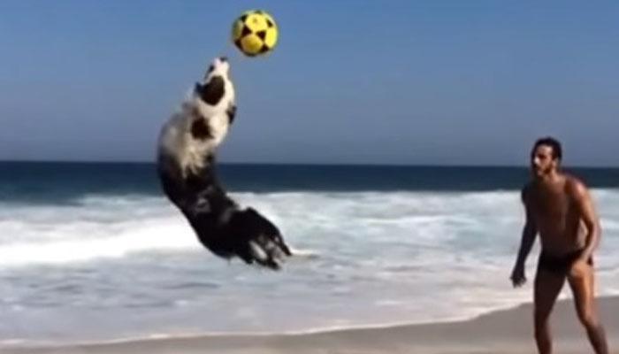 ब्राझिलचा हा कुत्रा फुटबॉल स्टार झालाय