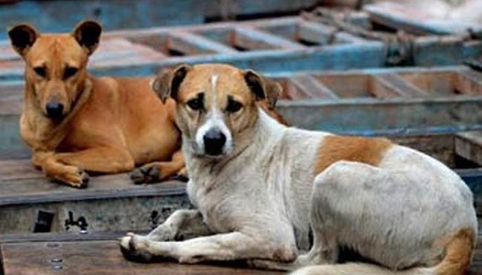भटक्या कुत्र्यांनी कोवळ्या जीवाचे लचके तोडले