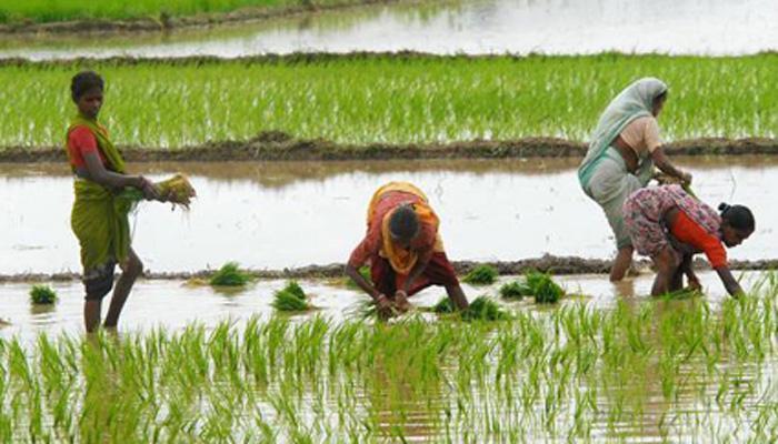 'पुढच्या पाच वर्षांमध्ये शेतकऱ्यांचं उत्पन्न दुप्पट'