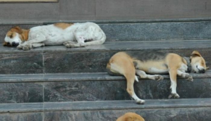 मुंबईतल्या एकाच भागात 20 कुत्र्यांचा मृत्यू