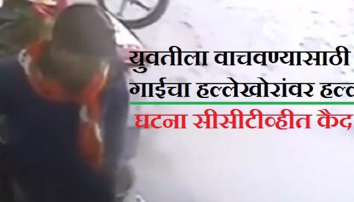 व्हिडीओ | मुलीच्या हत्याऱ्यांवर गाईचा हल्ला