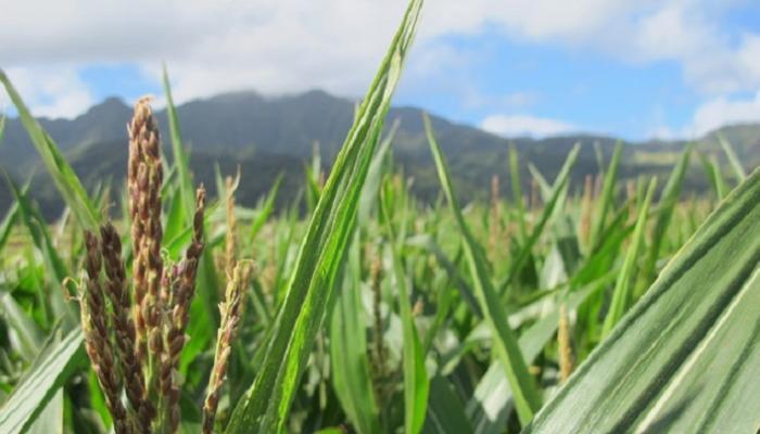 आयआयटीयन तरूणीने जीवनसाथी शेतकरी निवडला