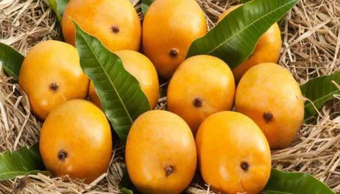 कोकण-गुजरातच्या आंब्यांची परदेशवारी... व्हाया नाशिक!