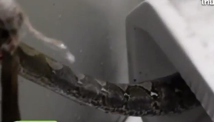 टॉयलेटमध्ये गेलेल्या व्यक्तीला चावला अजगर