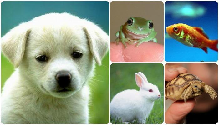 तुम्हालाही आपल्या घरात प्राणी पाळण्याचा छंद आहे?