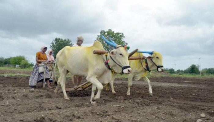 शेतकऱ्यांनी खरीपाच्या पेरणीची घाई करू नये - मुख्यमंत्री
