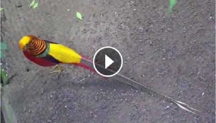 दुर्मिळ पक्ष्याचा व्हिडिओ सोशल मीडियावर व्हायरल