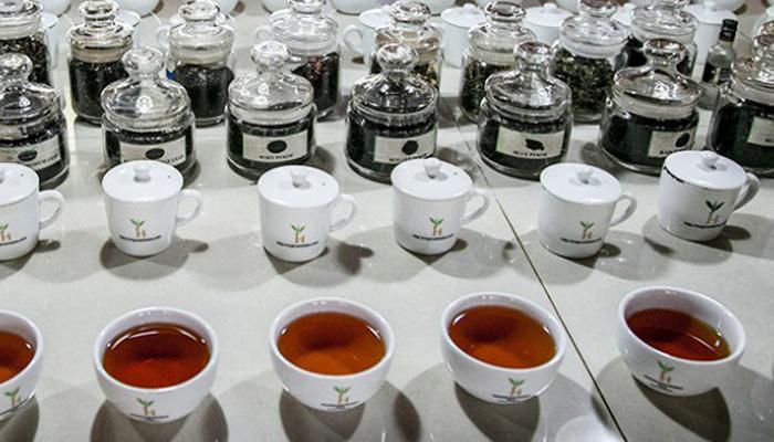 श्रीलंकेत मिळतो जगातील सर्वात महागडा चहा