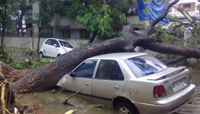 मालाडमध्ये झाड कोसळून एकाचा मृत्यू