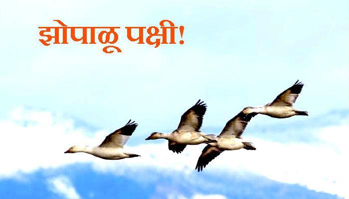 पक्षी उडता-उडताच काढतात डुलकी!