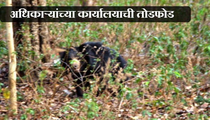 पिसाळलेल्या अस्वलाचा दोघांवर हल्ला, एक गंभीर जखमी
