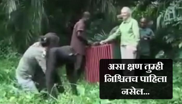VIDEO : एखाद्या चिम्पाझीला असं करताना तुम्ही क्वचितच पाहिलं असेल